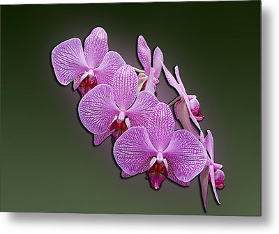 Metal Print featuring the photograph Pink Orchids by John Haldane