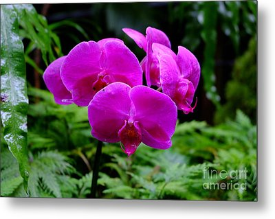 Pink Orchids Metal Print