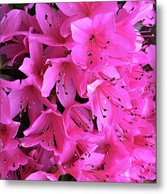 Metal Print featuring the photograph Pink Passion In The Rain by Sherry Hallemeier