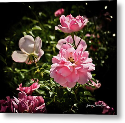 Metal Print featuring the photograph Pink Passion  by Joann Copeland-Paul