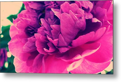 Metal Print featuring the photograph Pink Peonie by Paul Cutright
