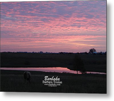 Pink Pond And Cow #5110 Metal Print