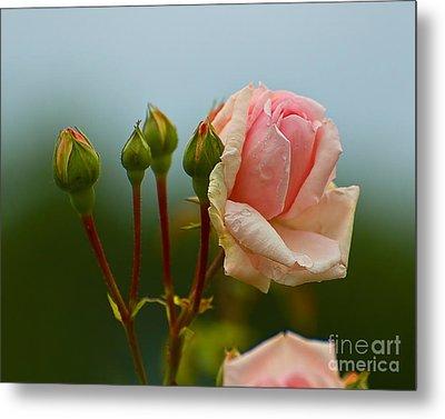 Pink Rose 2 Metal Print