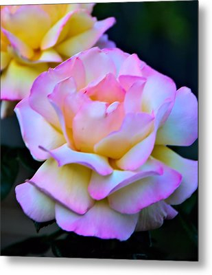 Pink Rose Metal Print by Josephine Buschman