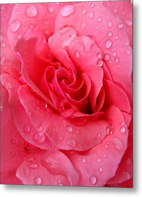 Metal Print featuring the photograph Pink Rose by Patricia Januszkiewicz
