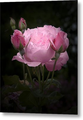 Pink Rose With Buds Metal Print