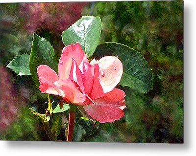 Pink Roses In The Rain 2 Metal Print