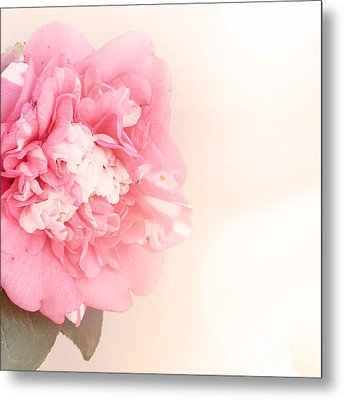Metal Print featuring the photograph Pink Ruffled Camellia by Cindy Garber Iverson