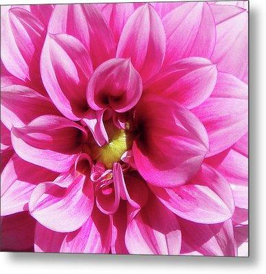 Pink Summer Flower Macro Metal Print