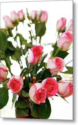 Pink Trimmed Roses Metal Print by Marilyn Hunt