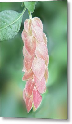Pink Tropical Flower Metal Print