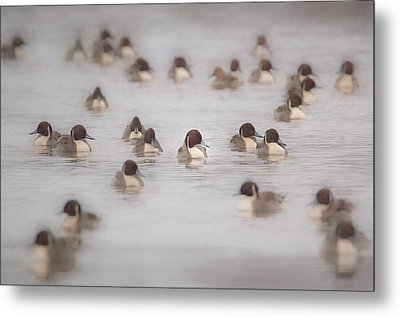 Pintail Repeat  Metal Print