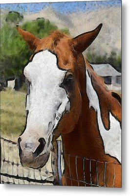 Metal Print featuring the photograph Pinto In The Pasture Portrait  by Barbara Snyder