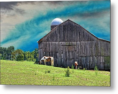 Pinto Summer Metal Print by Jan Amiss Photography
