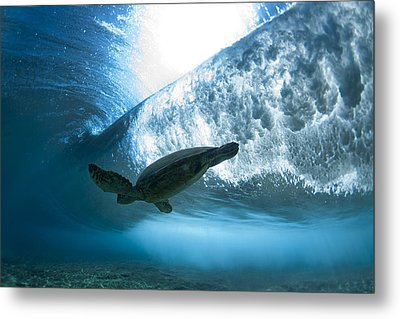 Pipe Turtle Glide  -  Part 3 Of 3 Metal Print by Sean Davey
