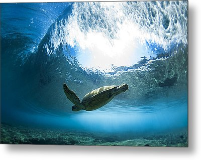 Pipe Turtle Glide Metal Print by Sean Davey
