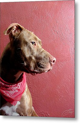 Pitbull Pride Metal Print by Geerah Baden-Karamally