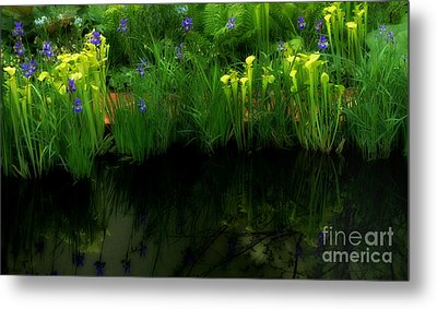 Pitcher Plant Garden Metal Print by Mike Nellums