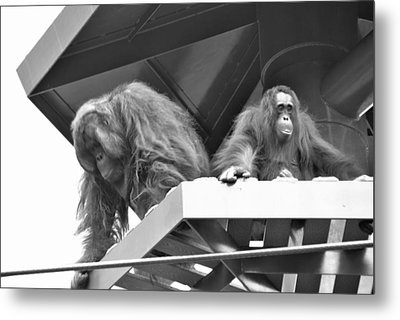 Planet Of The Apes Metal Print by Laura DAddona