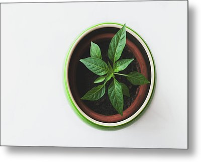 Plant Metal Print by Happy Home Artistry