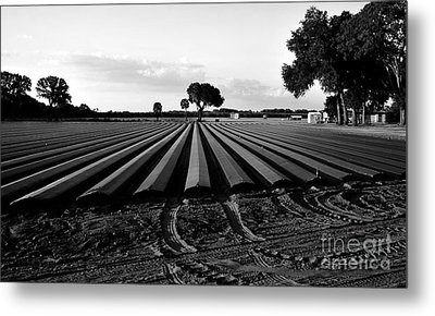 Planted Fields Metal Print by David Lee Thompson