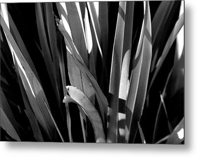 Planted Metal Print by Jez C Self