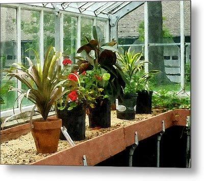 Plants In Greenhouse Metal Print by Susan Savad