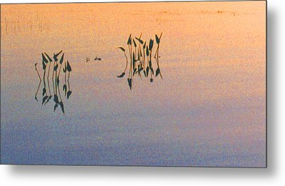 Metal Print featuring the photograph Plants In The Stillness 22 by Lyle Crump