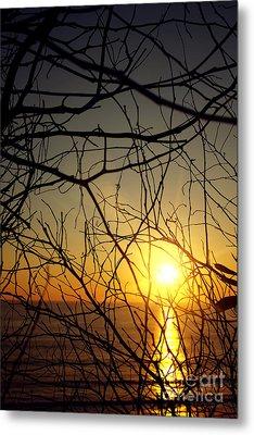 Plants On Sunset Metal Print by Carlos Caetano