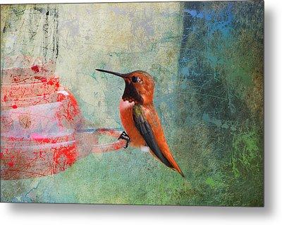Plate 048 - Hummingbird Grunge Series Metal Print
