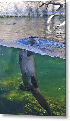 Playful Otter Metal Print by Kat Besthorn