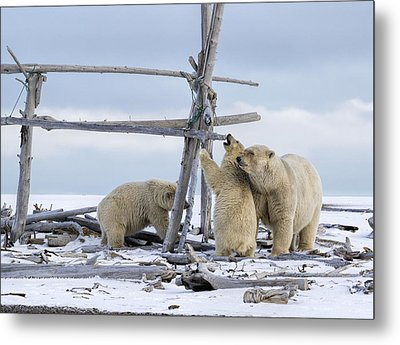 Playtime In The Arctic Metal Print
