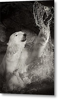 Metal Print featuring the photograph Playtime by Jessica Brawley