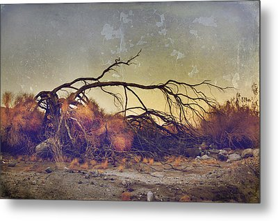 Pleading For Life Metal Print by Laurie Search