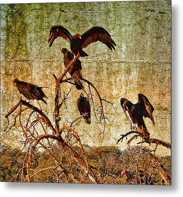 Metal Print featuring the photograph Pleasanton Vultures by Steve Siri