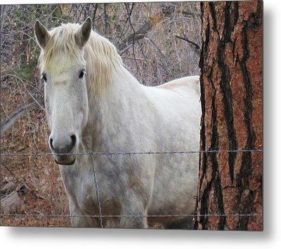 Please Come Pet Me Metal Print by Tammy Sutherland