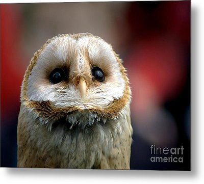 Please  Metal Print by Jacky Gerritsen