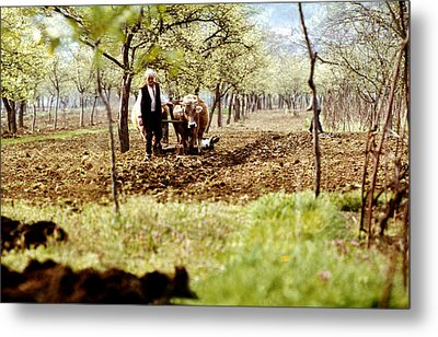 Ploughing In The Orchard Metal Print by Emanuel Tanjala