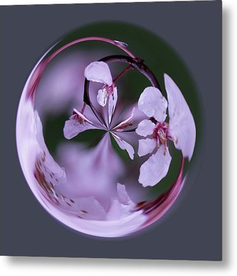 Metal Print featuring the photograph Plum Tree Orb by Bill Barber