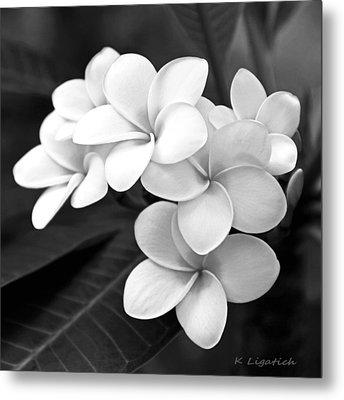 Plumeria - Black And White Metal Print