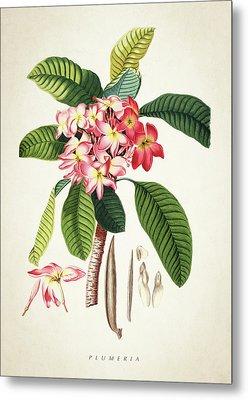 Plumeria Botanical Print Metal Print by Aged Pixel