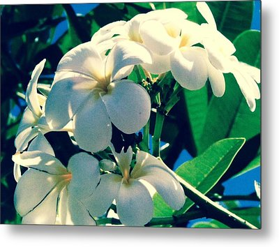 Plumeria In The Sun II - Edit Metal Print