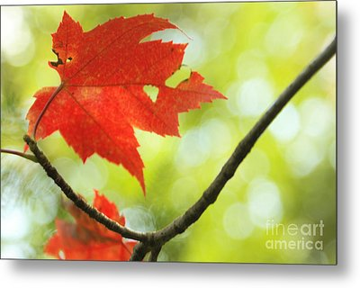 Metal Print featuring the photograph Poesie D'automne  by Aimelle