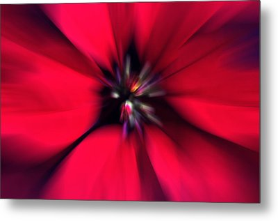 Poinsettia Zoom Metal Print by Steve Ohlsen