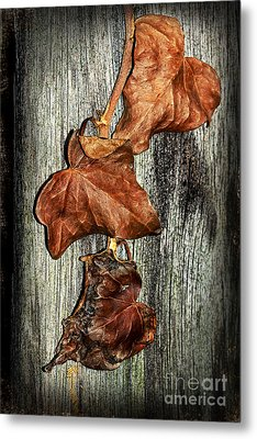 Poisoned Ivy By Kaye Menner Metal Print