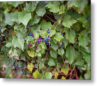 Poisonous Snozzberries Metal Print by Jacqueline Cappadora