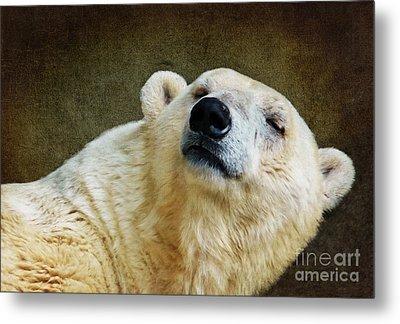 Polar Bear Metal Print by Angela Doelling AD DESIGN Photo and PhotoArt