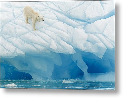 Polar Bear Metal Print by Joan Gil Raga