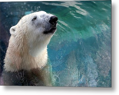 Polar Bear Up Close Metal Print