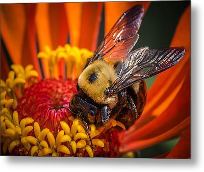 Pollen Plenty Metal Print by Bruce Pritchett